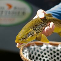 Western Rivers Flyfisher Guides