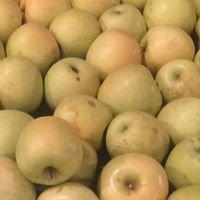 Moran's Orchard