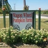 Wagon Wheel Pumpkin Farm