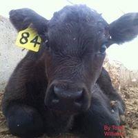 OKC West Livestock Market LLC