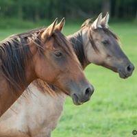 Cape Fear Equine Rescue