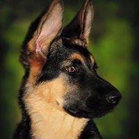Edge Kennel German Shepherds