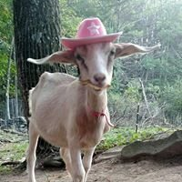 Sweet Rama's Homemade Goats Milk Soap