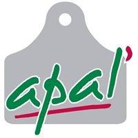 APAL'
