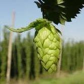 Northwest Brewers Supply