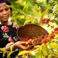 Chebonet Women Coffee Dev't Association CWCDA