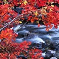 Green River Yoga & Movement