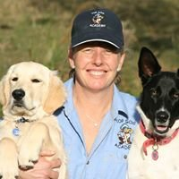 Dog Training Services - Top Dog Academy