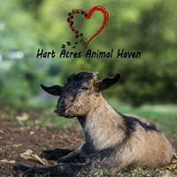 Hart Acres Animal Haven
