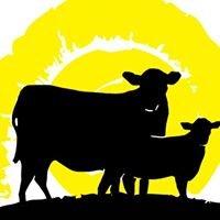Sun Fed Beef