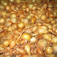 Gilliaum Feed & Seed