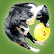 AirK9z Frisbee Dog Entertainment