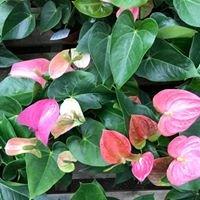 The Emerald Leaf Wholesale Greenhouse