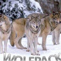 Alpha Company Wolfpack 1-50