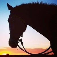 San Diego Beach Rides, Wagon Rides and Horse Rentals