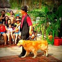 Dog Show for Parties and Events