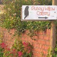 Pussy Willow Cattery