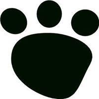 Black Bear Academy - Chicago Private