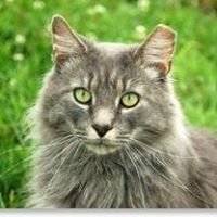 The Greek Cat Welfare Society (Rhodes)