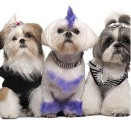 The Posh Pooch Pet Grooming & Doggy Daycare Centre