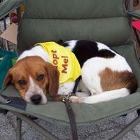 Happy Dog Barkery Rescue Network