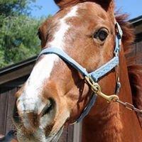 Ride On Therapeutic Horsemanship