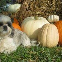 Bentley's Pumpkin's