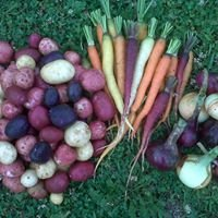Lilac Lane Farm Produce