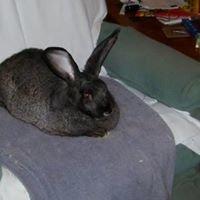 Rocking DM Rabbitry