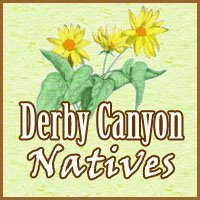 Derby Canyon Natives