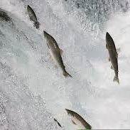 Foyle fishings