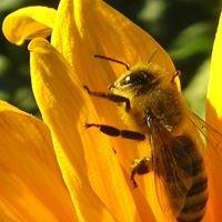 The Woogie Bee