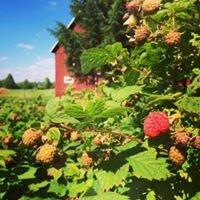 Black River Farm & Wilderness