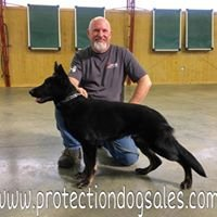 Protection Dog Sales