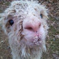 Raynay Alpaca Farm, LLC
