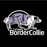 La Guía Del Border Collie