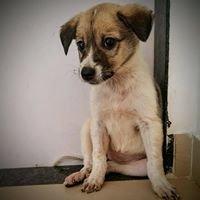 Pet Adoption pune