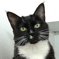 Sav-R-Cats Adoption Center