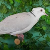American Dove Association