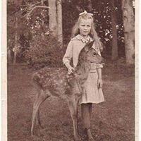 The Curious Deer
