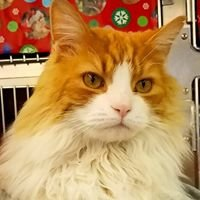 Independent Cat Society: New Arrivals