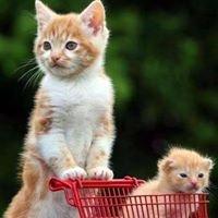 SAVE Thrift Shop