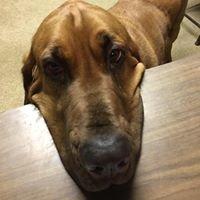 Anheuser Animal Clinic