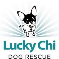 Lucky Chi Dog Rescue