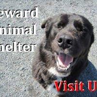 Seward Animal Shelter