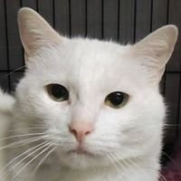 Independent Cat Society - Nook's Page