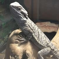 Second Chance Bird & Reptile Rescue