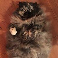 MEOW CAT Rescue KIAMA