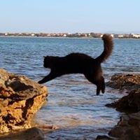 海辺で遊ぶ猫たち  Oasi Felina Su Pallosu-dove i gatti scendono in spiaggia