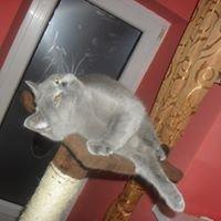 Koty u Ali